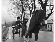 Melina, aged 9, driving Shetland stallion Chagall, Norway.
