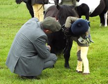 6 yr old Heidi Dickie shows judge Jeff McMaster her pony's bite (Yitter of Grutness 21 yrs young)