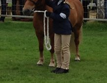 Secrets between pony and handler at Turriff Show