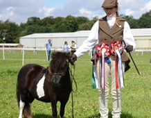 Parlington Delilah; 1st yearling Miniature champion  Shetland Youngstock champion Reserve  Overall Mini/Standard Shetland Champion