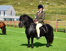 HOYS Winner - Hools Rising High